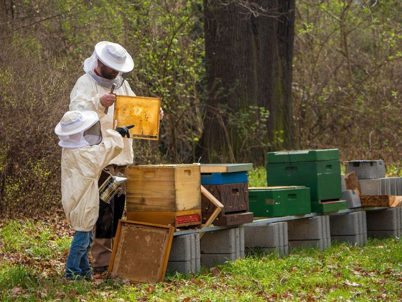 Sustainable tourism - a man and a child in bee-keeper gear taking honey from wooden hives