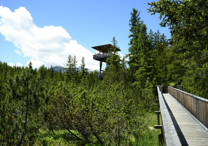 Accessible wooden hiking trail leading to a viewing tower